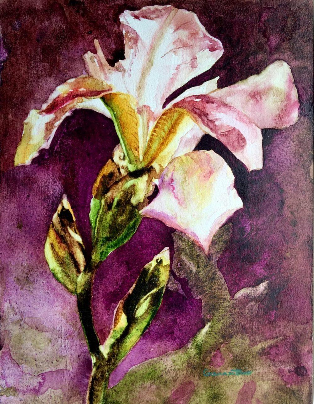 Iris Nostalgia